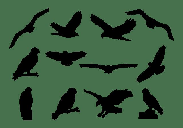 buzzard-silhouettes-vector