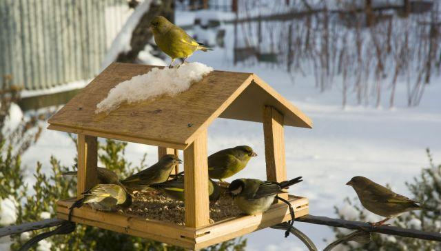 come-fare-una-mangiatoria-per-uccelli-fai-da-te